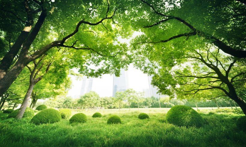Diferentes programas empresariales para cuidar el medio ambiente